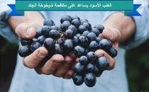 العنب الأسود يساعد على مكافحة شيخوخة الجلد