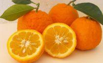 حمية البرتقال للتخلص من الوزن الزائد بطريقة صحية