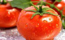 معلومات غذائية هامة حول فوائد الطماطم