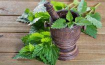 علاج نبات القراص لتنظيم الدورة الشهرية