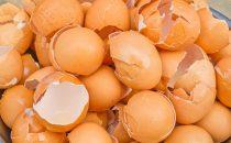 فوائد قشر البيض واستخدامات مذهلة له