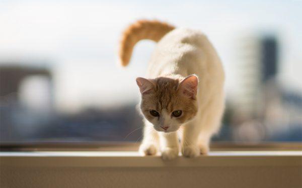 هل تعرفين مخاطر تربية القطط في البيت
