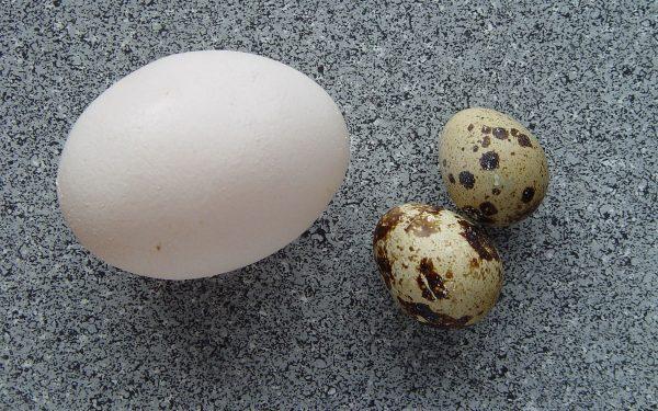 هذه هي الطريقة الصحيحة لسلق البيض
