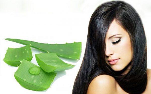 خلطة جل الصبار لتطويل الشعر والتخلص من القشرة