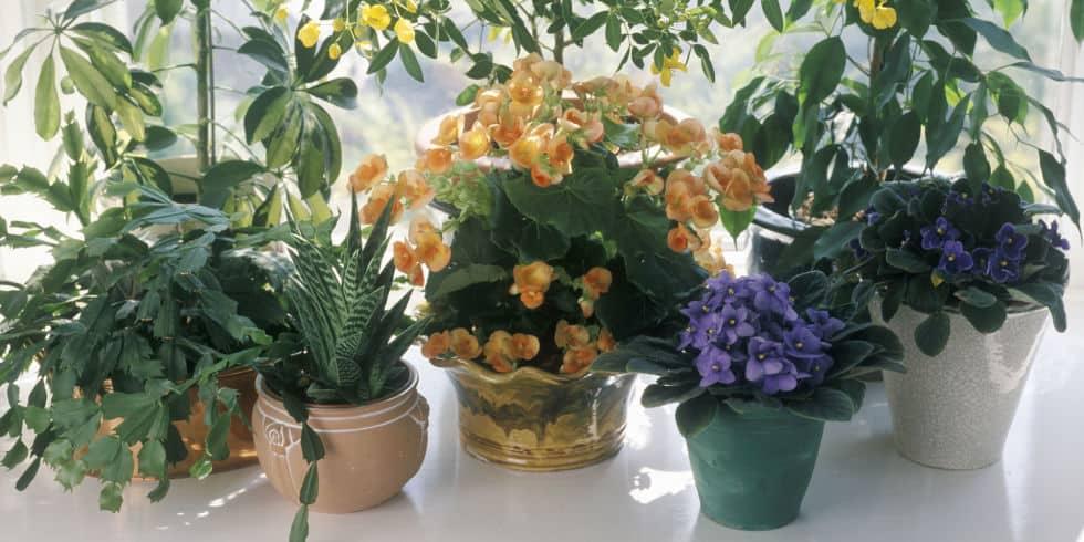 زراعة النباتات