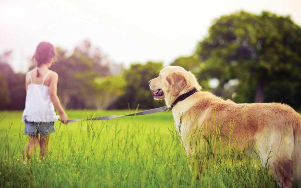 الحيوان الأليف يحميك من أمراض القلب