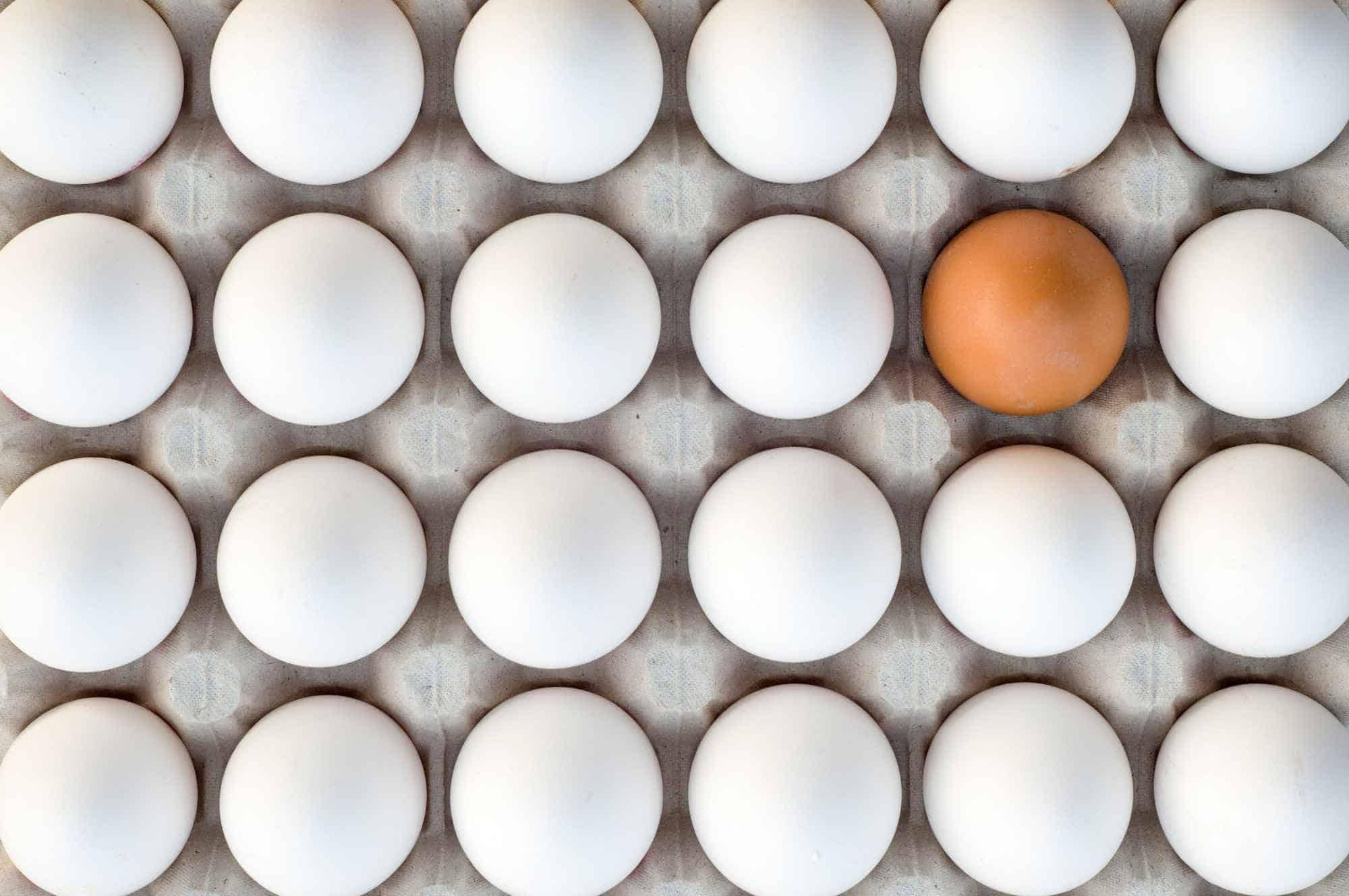 كيف تميزين البيض الجيد من الرديء