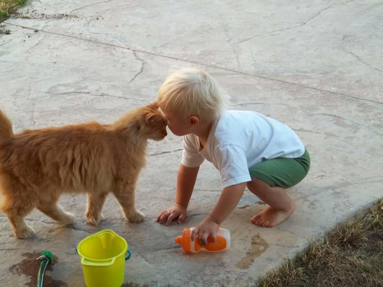 قيمة الحيوانات الأليفة في تربية الأطفال