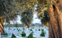 استمتعي بحفل زفاف استثنائي في منتجع بير أكووم ديزرت بدبي