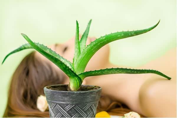 علاجات منزلية رائعة باستخدام الألوة فيرا