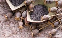 اكتشفي فوائد بذور الخشخاش الطبيعية