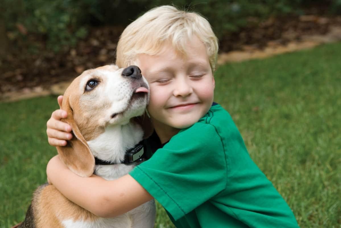 الحيوان الأليف والطفل