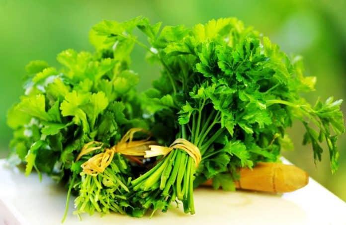 7 فوائد صحية رائعة لنبات الكزبرة.. تعرفي عليها معنا