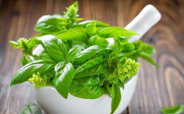 أعشاب مفيدة للشعر
