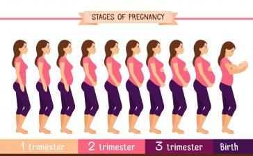 كيفية حساب أسابيع الحمل