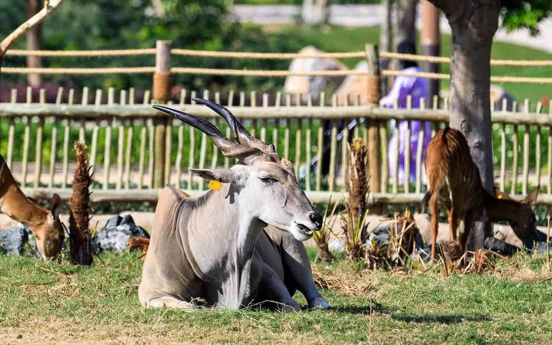 حديقة الحيوانات في دبي