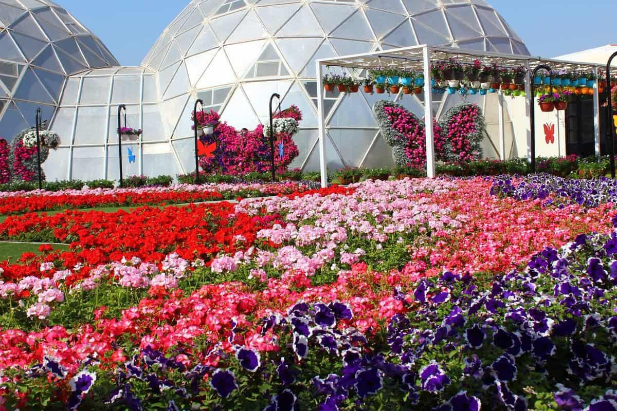 اجمل الحدائق في دبي :حديقة الفراشات دبي