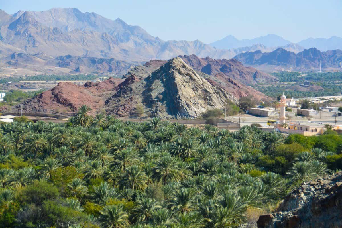 اماكن سياحية في دبي : محمية رأس الخور للحياة البرية