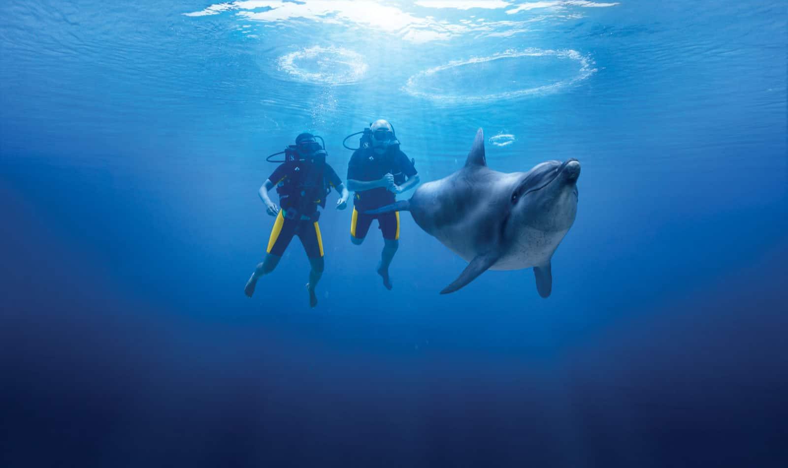 اماكن سياحيه في دبي : خليج الدلافين في دبي