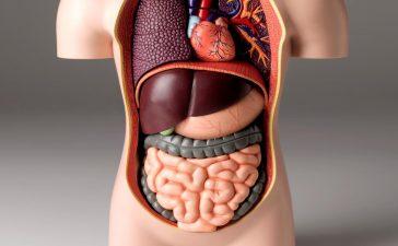 أطعمة صحية تساعد في تنظيف القولون