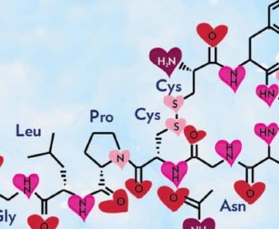 الأوكسيتوسين هرمون الحب