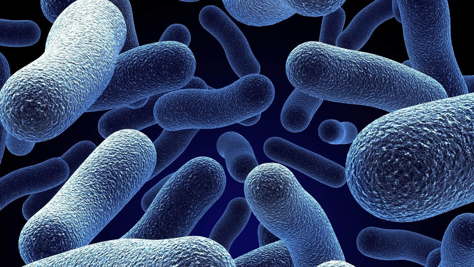 كيفية علاج بكتيريا البول عند السيدات بالأعشاب