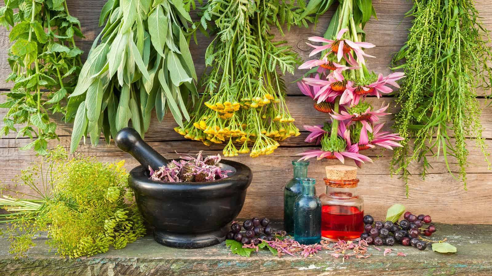 أعشاب طبية لتعزيز طاقة الجسم