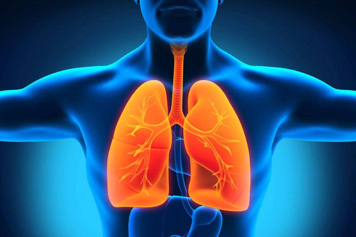 قائمة بأفضل الأطعمة التي تساعد في تحسين التنفس وتنقية الرئتين
