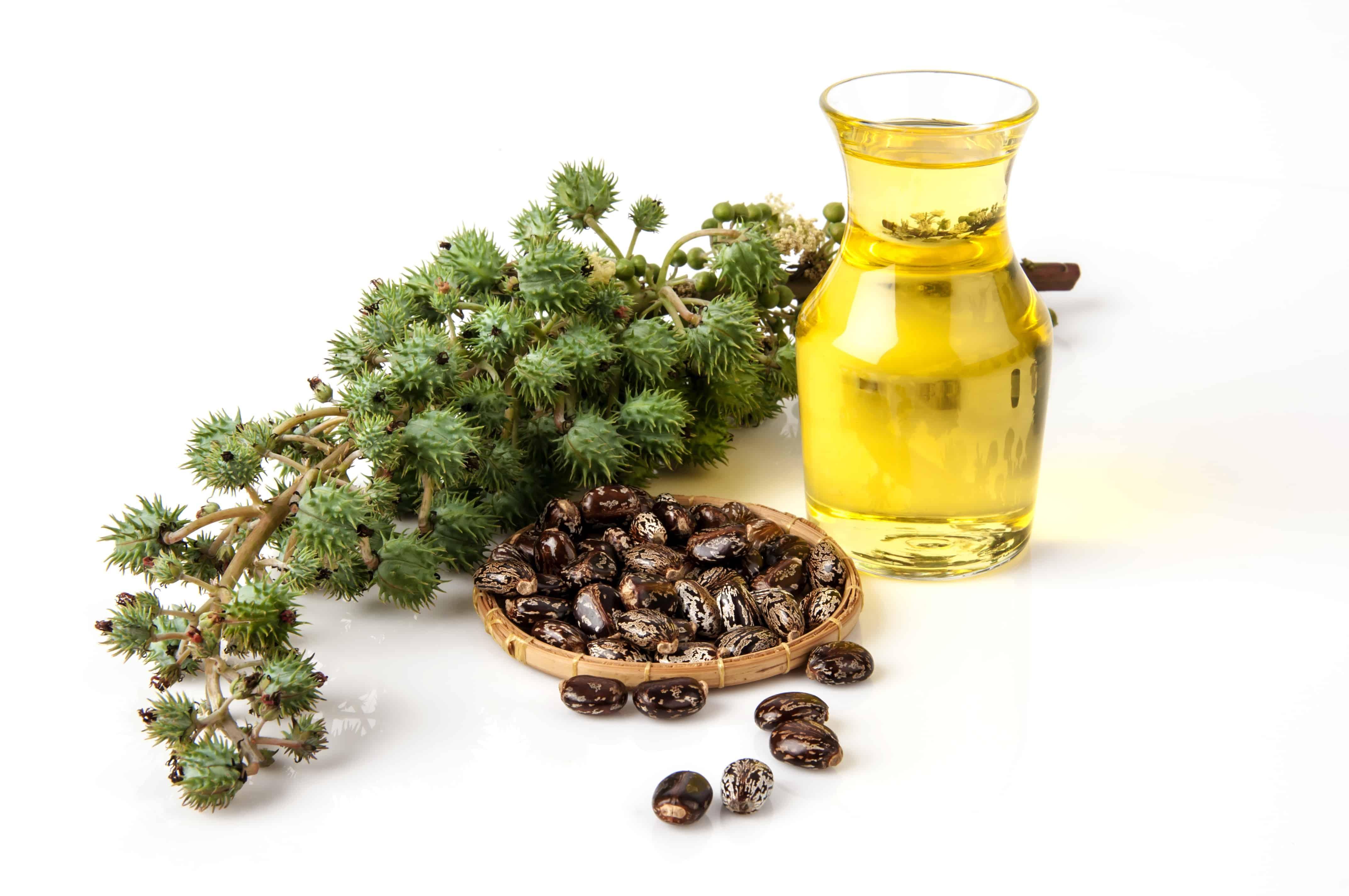 استخدامات غير معروفة لزيت الخروع.