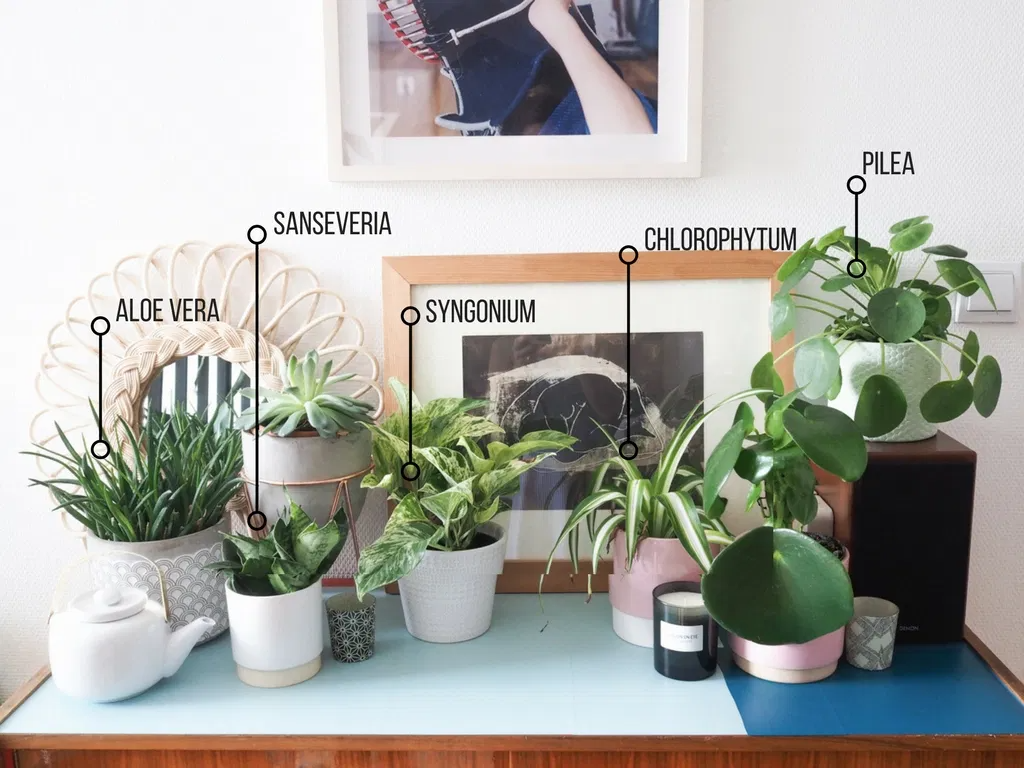 أفكار سهلة لتوظيف النباتات ضمن ديكور المساحات الداخلية