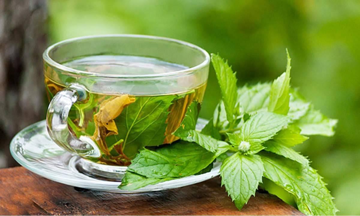 5 أنواع شاي تخلصك من النفخة وتمنحك بطن مسطح