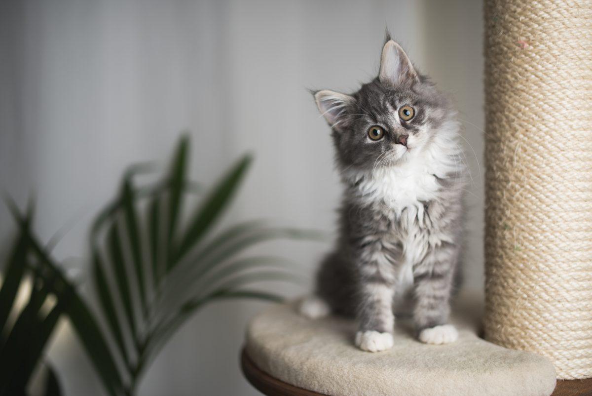 5 حيل منزلية سهلة للتخلص من شعر القطط نهائيا